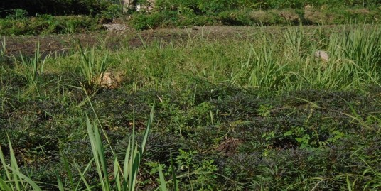 TITLED PLOTS FOR SALE IN JINJA TOWN