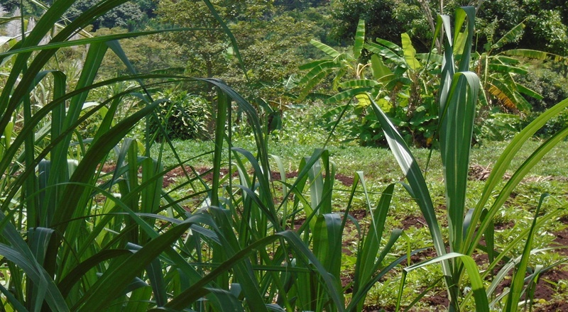 LAND FOR SALE IN BUWENDA JINJA DISTRICT
