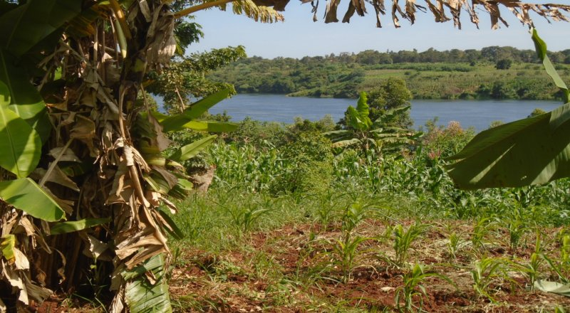 RESIDENTIAL PLOTS FOR SALE IN JINJA TOWN