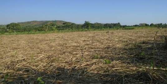 5 Acres of Beautiful Land with Lake views for Sale in Jinja – Mwiri