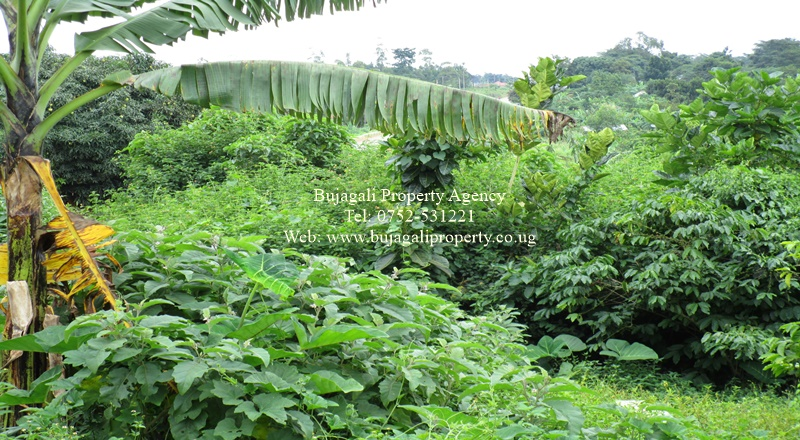 13 ACRE LAND FOR SALE ALONG THE ROAD AT KANGULUMIRA