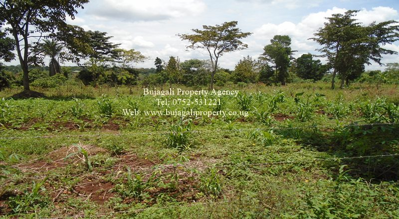 CHEAP PLOTS FOR SALE IN BUIKWE KITIGOMA