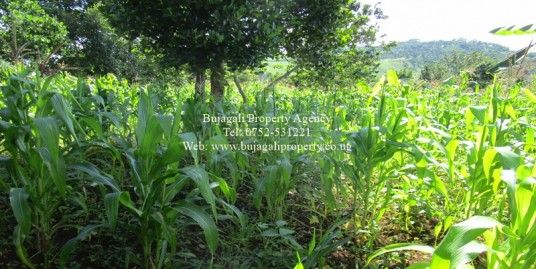 LAND FOR SALE AT BUWENDA TOWARDS RIVER NILE