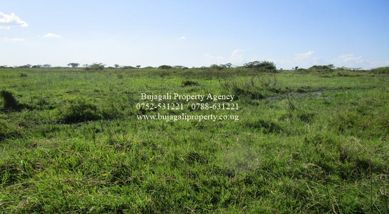 400 ACRES OF AGRICULTURAL LAND FOR RENT IN KAMULI