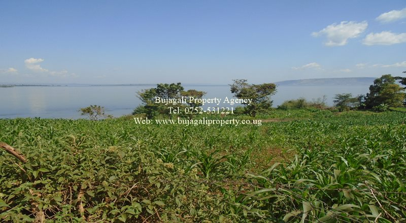 20 ACRES OF LAKESIDE LAND SUITABLE FOR A BEACH IN JINJA
