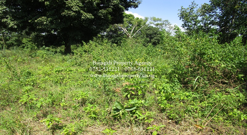 45 ACRES OF AGRICULTURAL LAND FOR SALE IN BUGIRI