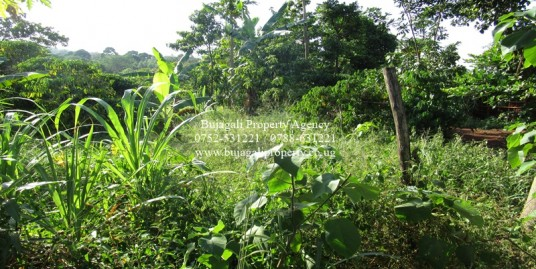 2 ACRES OF TITLED RESIDENTIAL LAND FOR SALE AT BUJOWALI NJERU
