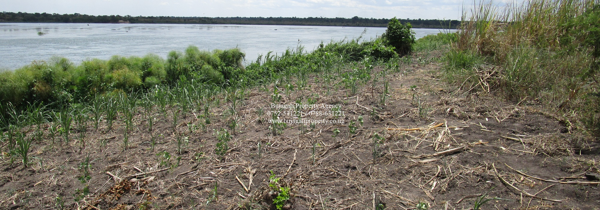 50 ACRES FOR SALE ALONG THE NILE AT NAMASAGALI KAMULI