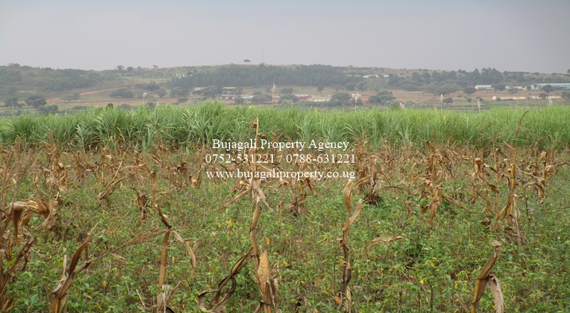 5 ACRES OF FREEHOLD TITLED LAND ALONG JINJA IGANGA ROUTE