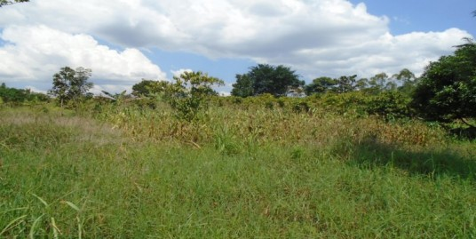 100ft x 100ft PLOT FOR SALE AT NJERU BUJOWALI