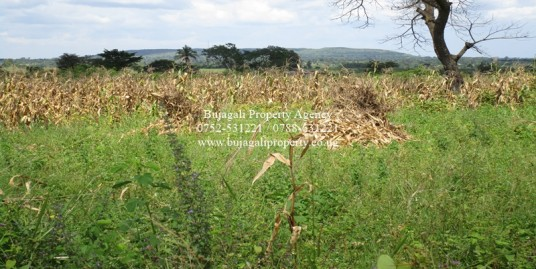 300 ACRES OF AGRICULTURAL LAND FOR SALE AT BUGIRI DISTRICT