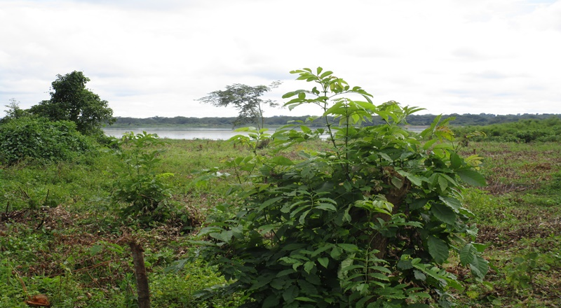 5028 ACRES OF LAND TOUCHING THE NILE AT NWOYA DISTRICT