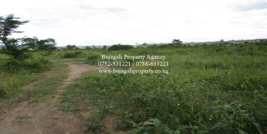 84 ACRE RANCH FOR SALE AT NAKASONGOLA