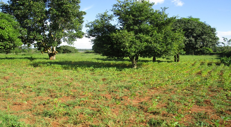 23 ACRE FARM LAND FOR SALE AT KAMULI MBULAMUTI