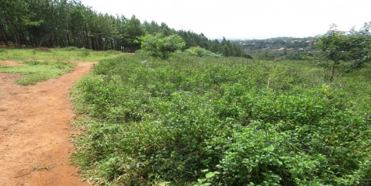 TWO ACRES OF TITLED LAND FOR SALE AT BUTIKI MAFUBIRA JINJA