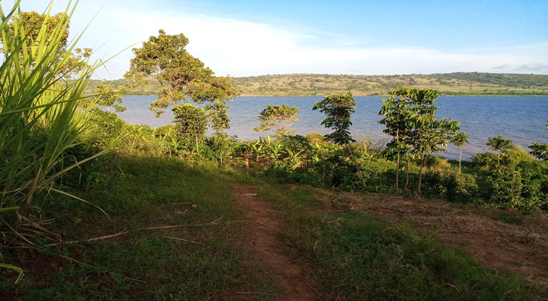 1.5 ACRES OF LAKE SHORE LAND FOR SALE IN JINJA