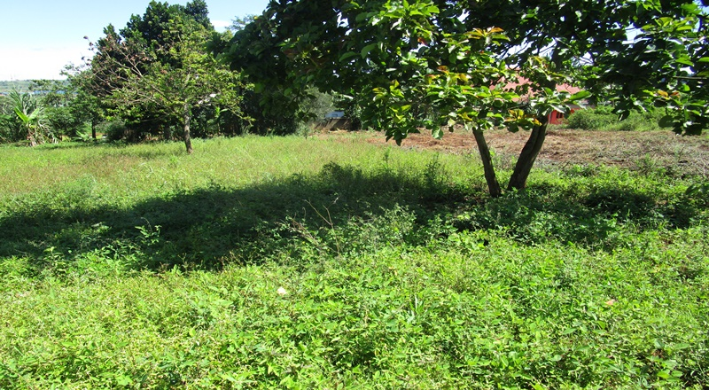 LEASEHOLD TITLED LAND FOR SALE NEAR JINJA TOWN