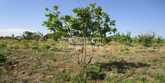 AGRICULTURAL FARMLAND FOR SALE IN BUYENDE DISTRICT