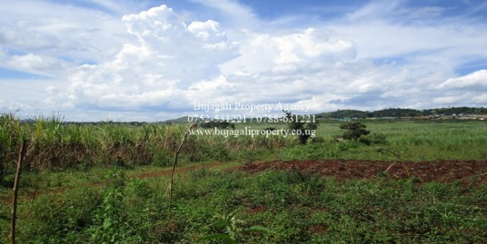 AGRICULTURAL SIX ACRE LAND FOR SALE AT MAGAMAGA JINJA