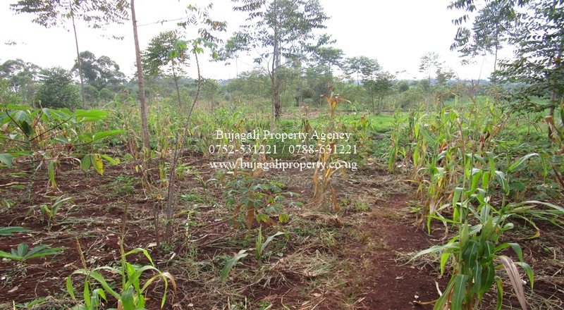 AGRICULTURAL LAND FOR SALE AT NAWAMPANDA JINJA DISTRICT