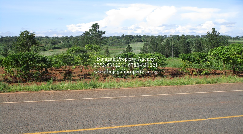 10 ACRES FOR SALE ALONG THE NEW MAYUGE HIGHWAY