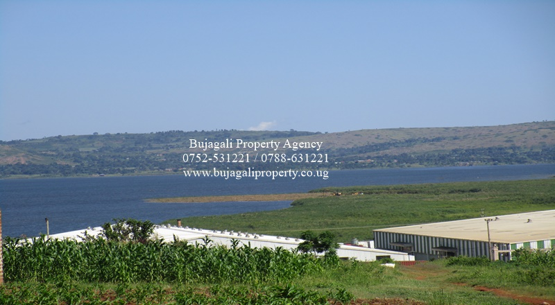 JINJA MASESE LAKE VIEW PLOT FOR SALE IN DEVELOPED AREA
