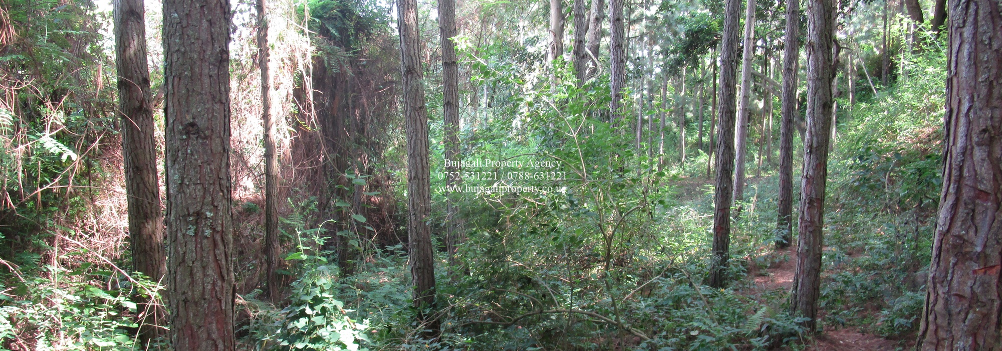 19.5 ACRE LAND WITH PRIVATE FOREST FOR SALE IN JINJA CITY