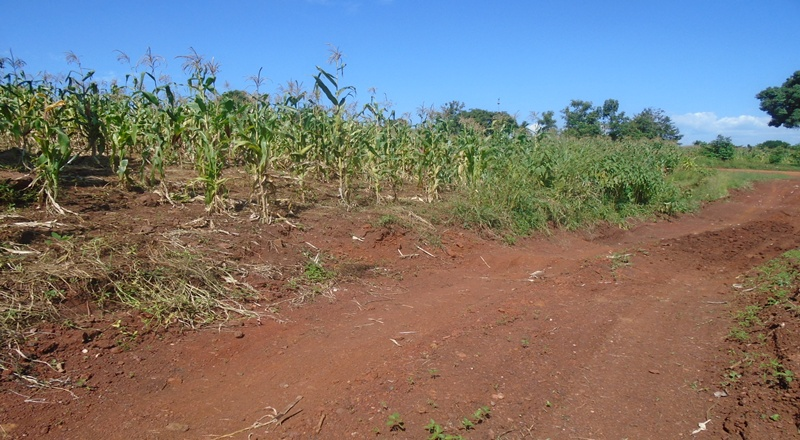 PLOT FOR SALE AT MUSIMA WANYANGE JINJA DISTRICT