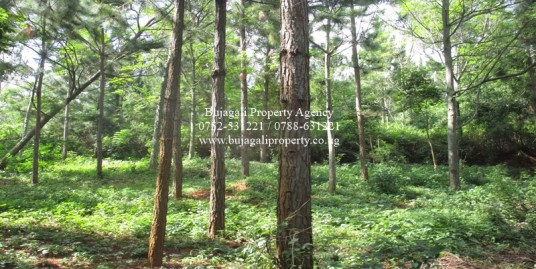 21.5 ACRE LAND WITH PRIVATE FOREST FOR SALE IN JINJA CITY