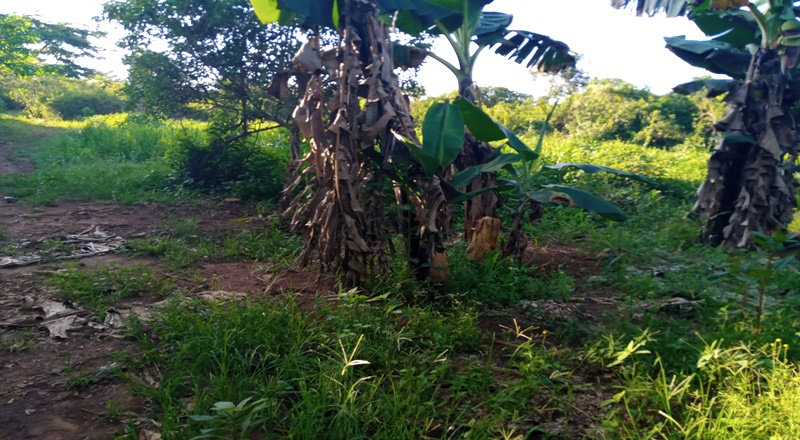 NEW 60FT X 100FT TITLED PLOT FOR SALE AT BUKAYA NJERU