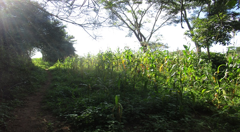 NEW 100FT X 100FT TITLED PLOT FOR SALE AT BUKAYA NJERU