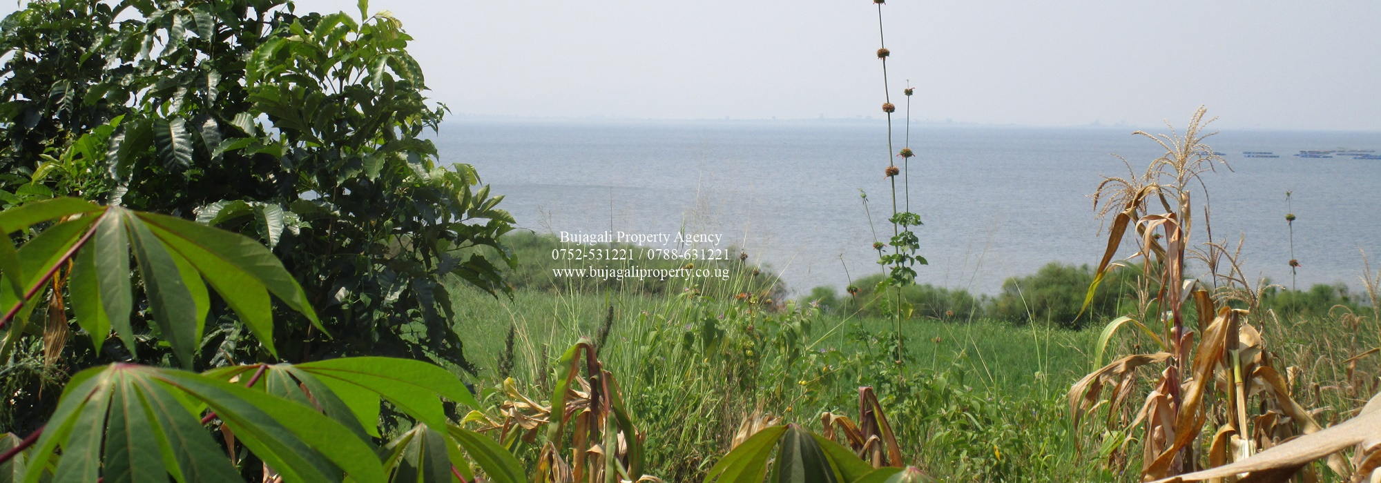 FOUR ACRE LAKE SHORE LAND FOR SALE CLOSE TO JINJA CITY