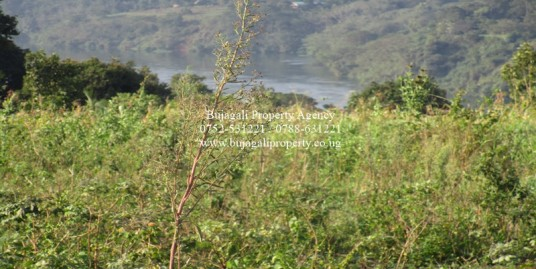 JINJA RIVER VIEW 100FT X 100FT PLOTS FOR SALE