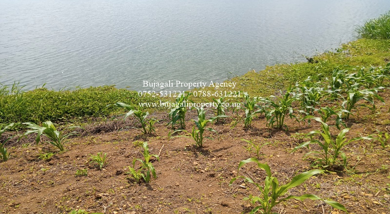2.5 ACRES OF LAND FOR SALE ALONG THE NILE RIVER