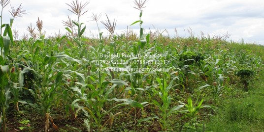 12 ACRE PRIVATE LAND FOR SALE AT BUWENGE JINJA DISTRICT