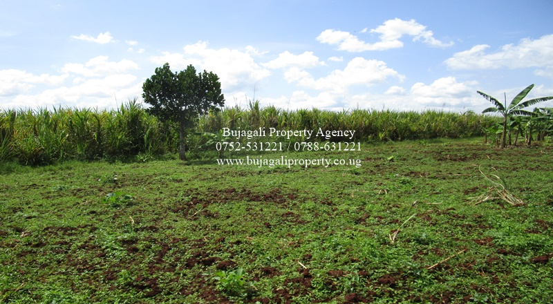 50FT X 100FT PLOTS FOR SALE AT NAKABANGO JINJA DISTIRICT
