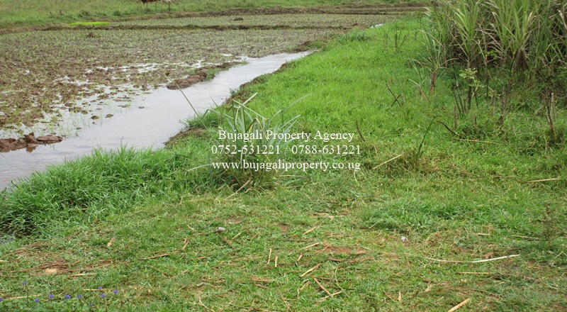 10 ACRE AGRICULTURAL LAND FOR SALE NEAR KAKIKA SUGAR FACTORY