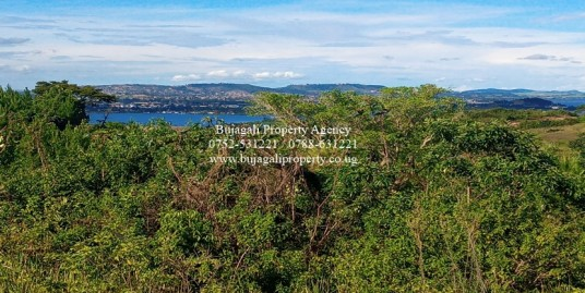 2.3 ACRE TITLED LAND WITH PINE TREES FOR SALE AT NJERU BUIKWE