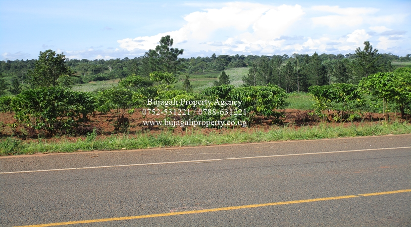 8 ACRE LAND FOR SALE AT MAYUGE NEAR THE SUGAR FACTORY